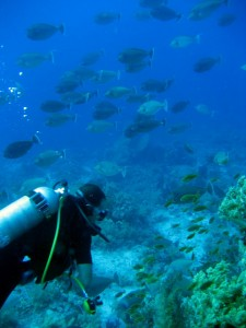 Mar Rojo - Oscasub
